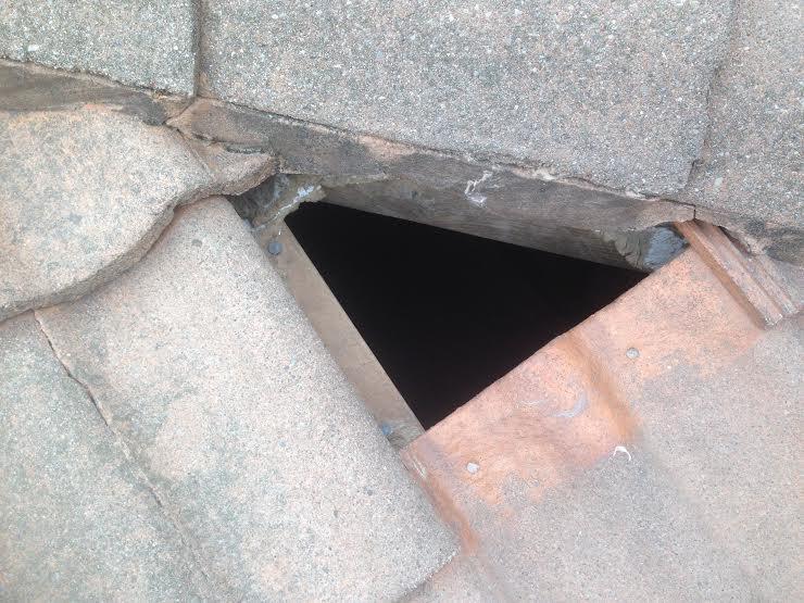 Raccoon Damage to Roof