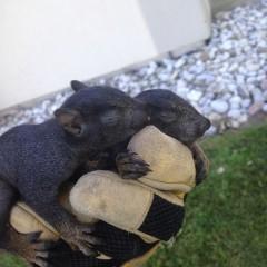 Newborn Squirrels
