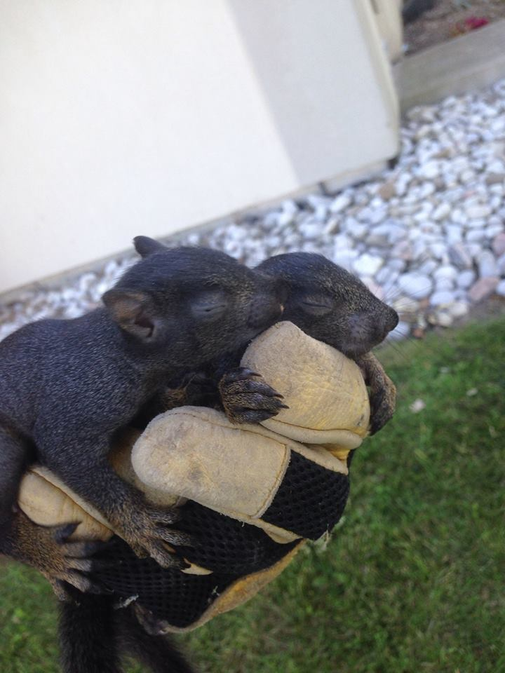 Newborn Squirrels